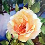 Rose by the Gate 14 x11 Watercolor on Aquabord Demo $200 Sells unframed